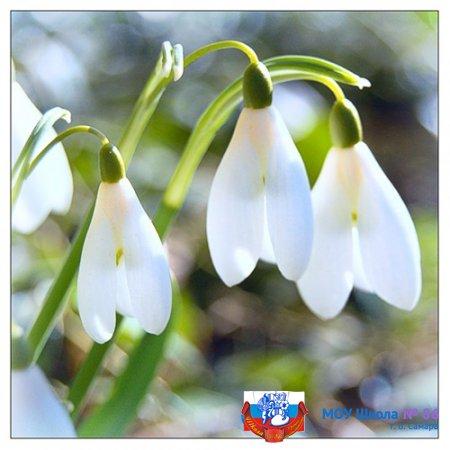 Поздравляем с первым днем весны!